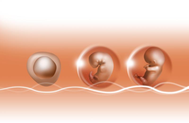 不妊症一般治療とART
